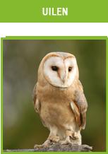 Valkerij Ardanwen - uilen